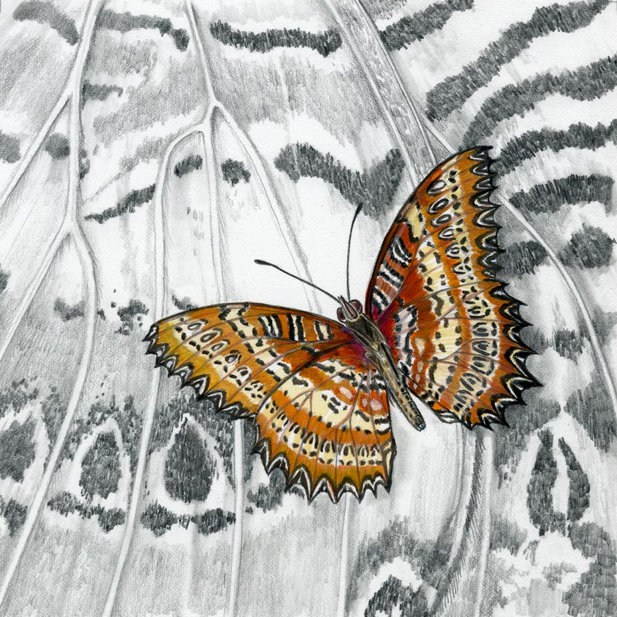The Lacewing Butterfly