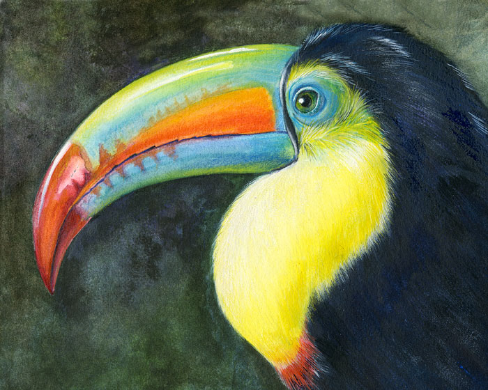 Rainbow-keeled Toucan