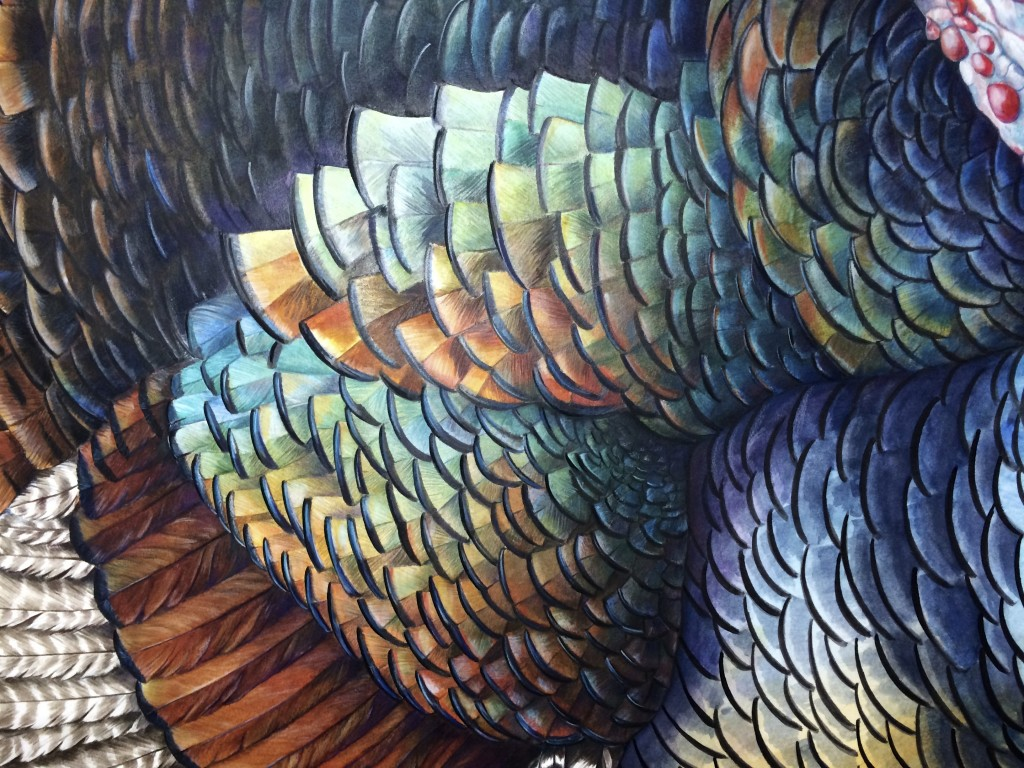 Wild Turkey detail- ©2014 Mindy Lighthipe