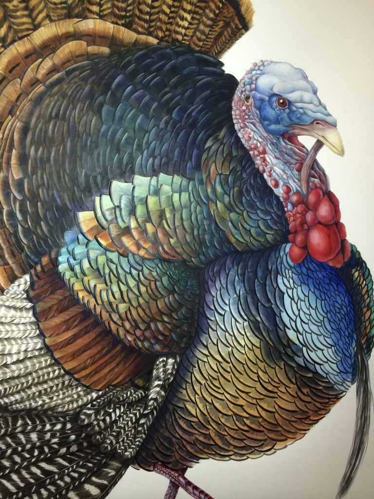Wild Turkey in progress ©2014 Mindy Lighthipe