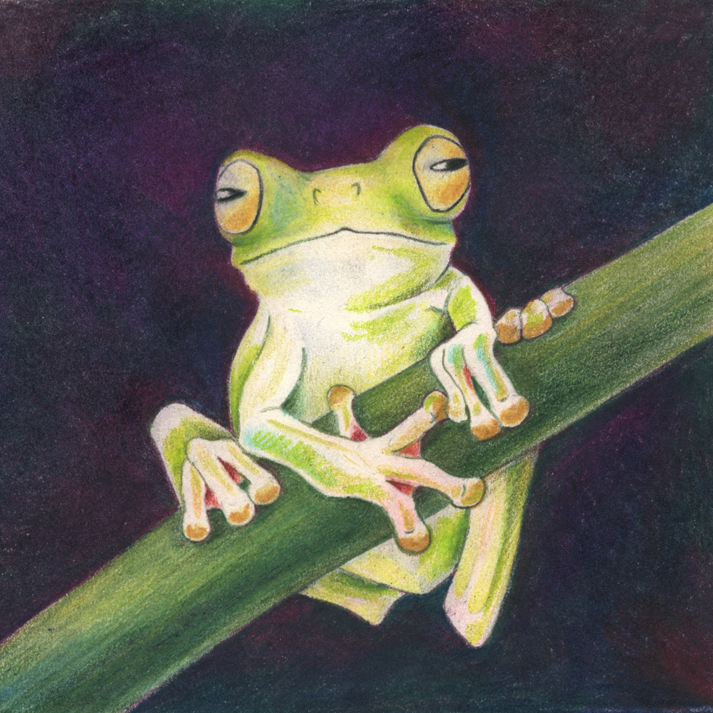 """Froggie"" in colored pencil 4.5"" x 4.5"" ©2016 Mlighthipe"