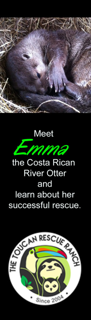 Emma the River Otter- Toucan Rescue Ranch